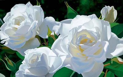 Summer Special Spray Roses