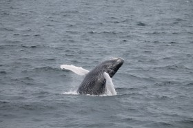 $8 Off Any Whale Watch!