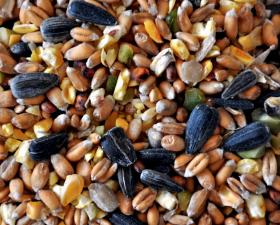 15% Off Bird Seed