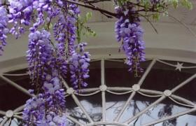 Museum of Old Newbury Annual Garden Tour
