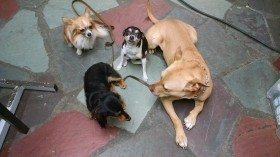 Socialization Dog Classes!