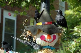 Don't Miss the Scarecrow Contest Judging