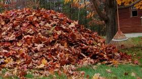 Instant Rebates on RedMax Leaf Blowers