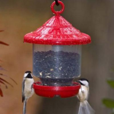 Bird Feeders Are Forever