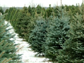 Trees, Wreaths, and Greens!