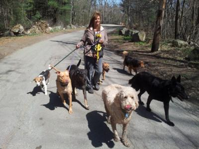 Announcing Adult Dog Training Classes!