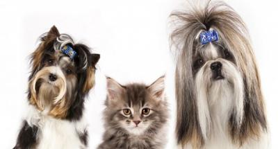 $5 Off Your First Pet Grooming!